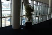 8F植物圧縮後②