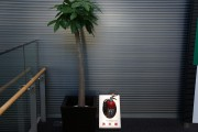 2F植物圧縮後②