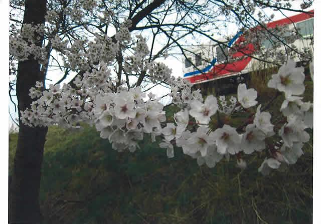 ①三陸の春